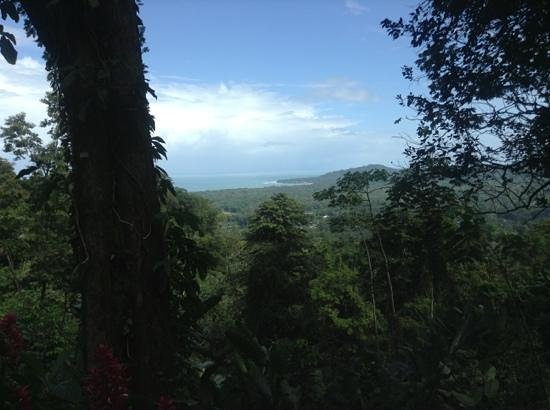 Samasati Retreat & Rainforest Sanctuary: view from the restaurant
