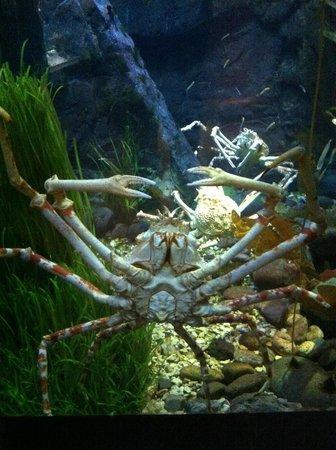 Crab Picture Of Dallas World Aquarium Dallas Tripadvisor