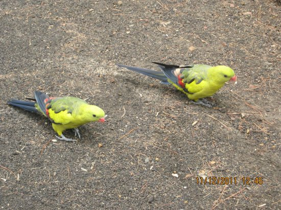 Lathami Lodge: Pretty birds visiting the property