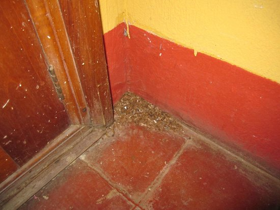 Hostel Libertad: Mouse fecies in the corner of the room