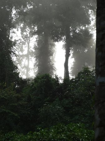 ‪‪Tabin Wildlife Resort‬: Forest in the mist