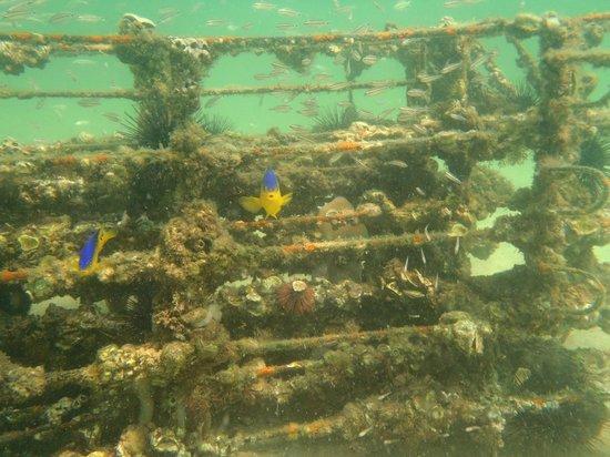 Treasure Island Panama City Beach Fl Reviews