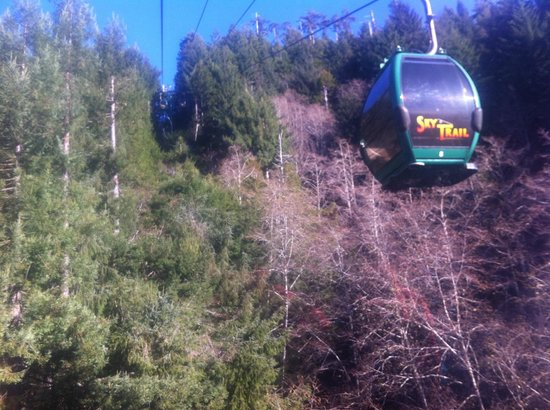 Trees of Mystery: The SkyTrail Ride