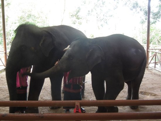 Sawasdee Village: elephants reserve of Phuket
