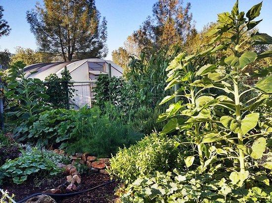 Pleasant Valley Sanctuary: garden