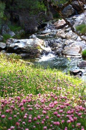 Pleasant Valley Sanctuary : the sanctuary