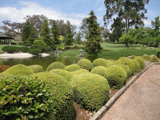 Topiary plants - Picture of Cowra Japanese Garden, Cowra - TripAdvisor