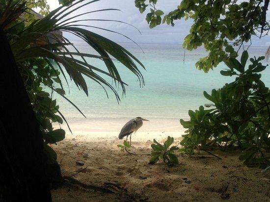 Kuramathi Island Resort: Stunning Island Paradise
