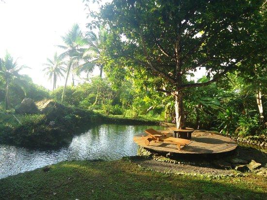 El Almejal Lodge & Natural Reserve: Desde la cabaña