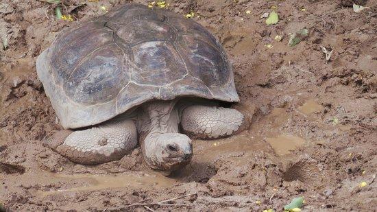 Domaine de La Reserve: tortue