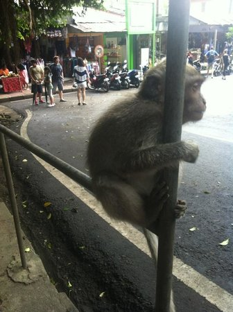 Lodtunduh Sari: Monkey magic at monkey forest road ubud