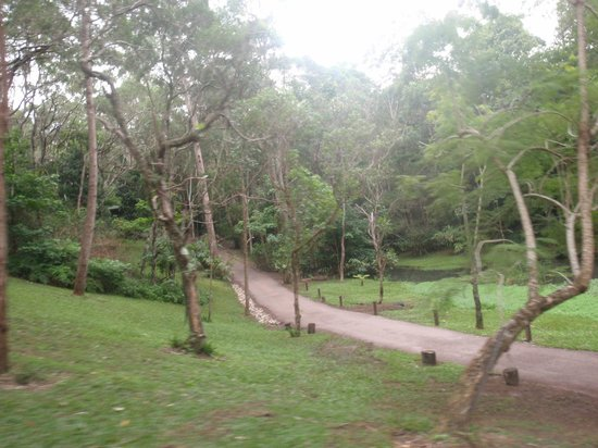 Kondalilla Eco Resort: Property Grounds