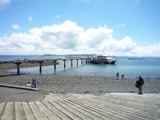 Tiritiri Matangi Island: The ferry takes to and from the island.
