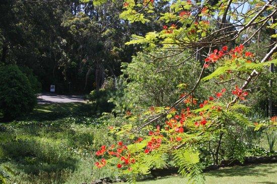 Korora Bay Village Resort: Beautiful grounds