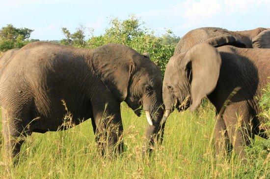 Tydon Safari Camp: elefanti