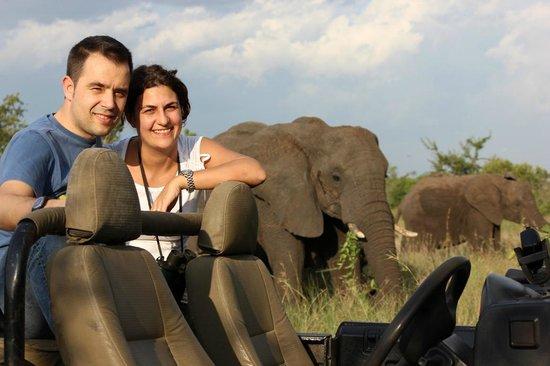Tydon Safari Camp: elefante - safari off road