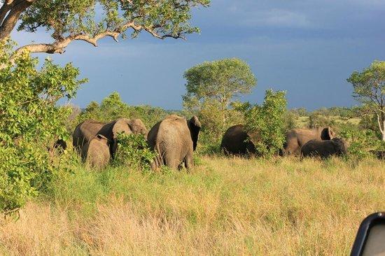 Tydon Safari Camp: gruppo elefanti