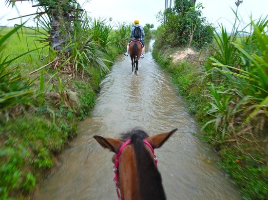 โรงแรมเดอะ คูล: Morning ride through the rice paddy fields, just after sun rise - amazing!