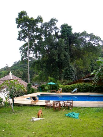 The Grand Tree Resort: la piscine de la Grosse Mignonne