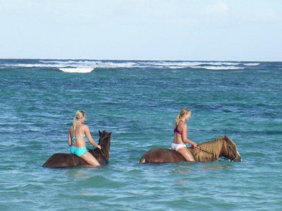 Dreams Palm Beach Punta Cana: Strandausritt mit Gabi