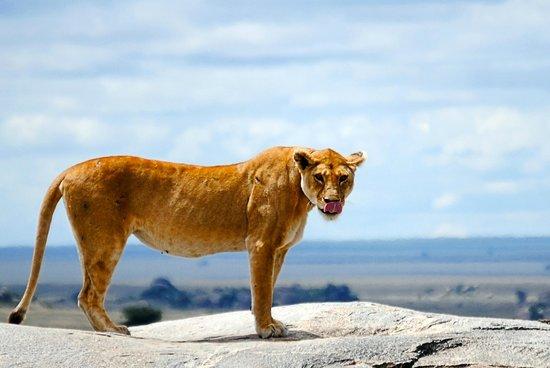 Αρούσα, Τανζανία: Safari with Duma Explorer