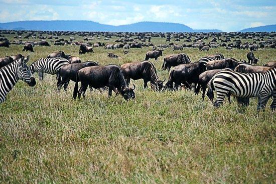 Arusha, Tanzania: Safari with Duma Explorer