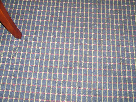 Comfort Inn & Suites: More stained carpet