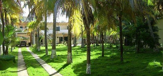 Posada Alemania: Jardín de palmeras