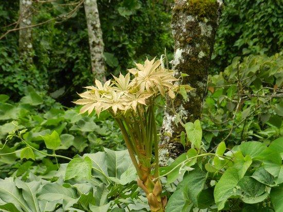 Foliage alont the Quetzal trail