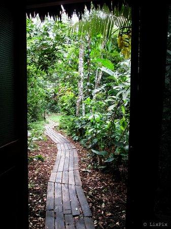 Ecoaldea Kapievi: The view from my door