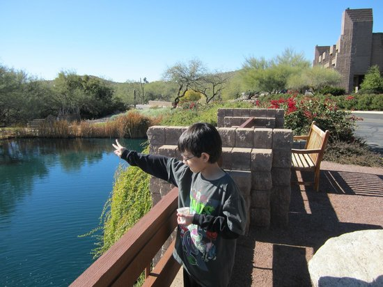 Loews Ventana Canyon Resort: Feeding the koi fish