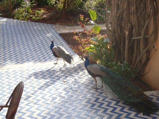 Villa Mandarine: Peacocks on the grounds