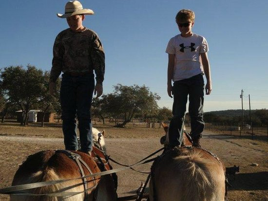 Rancho Cortez: Kids standing on the Belgian horses