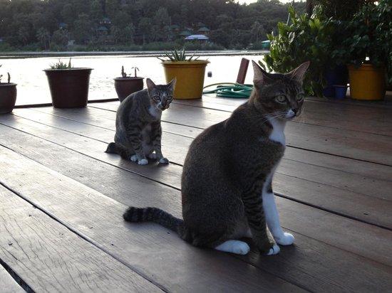 La Madrague: Cats