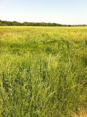 Oak Point Park & Nature Preserve : Prairie Grasses