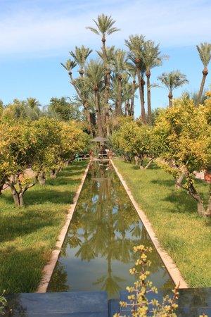 Musee de la Palmeraie: jardin