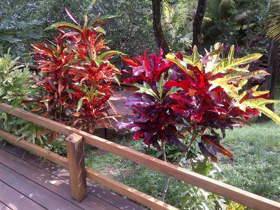 "Villagio Verde: Brilliant ""Christmas"" plants"