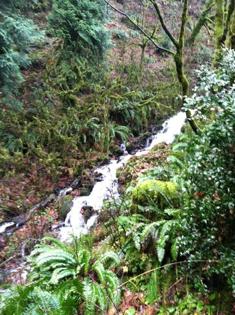 Cataratas Multnomah: Another stream feeding the falls