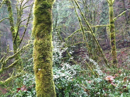 "Multnomah Falls: Life everywhere, even on ""dead"" trees"