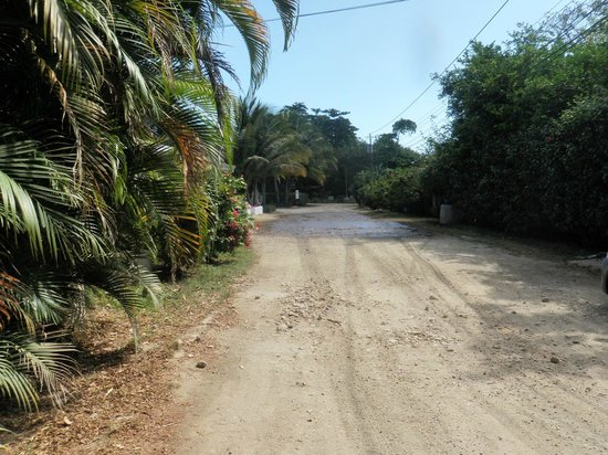 Nosara Beach (Playa Guiones): Streets glazed with molasses to keep the dust down. Smells great!