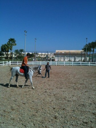 Edelweiss Equestrian Center: novice tuition