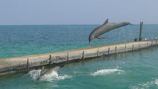 Decameron Isla Palma: Show de delfines