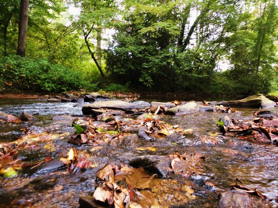 Mountain Springs Cabins: The stream.