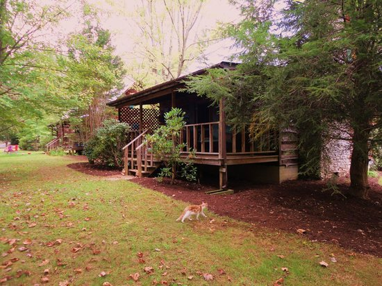 Mountain Springs Cabins: Back of cabin #11