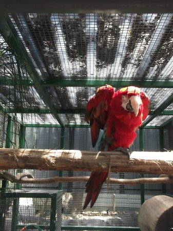 Ashmore Palms Holiday Village: One of the McCaw birds