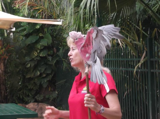 Ashmore Palms Holiday Village: Gloria the bird trainer with one the birds