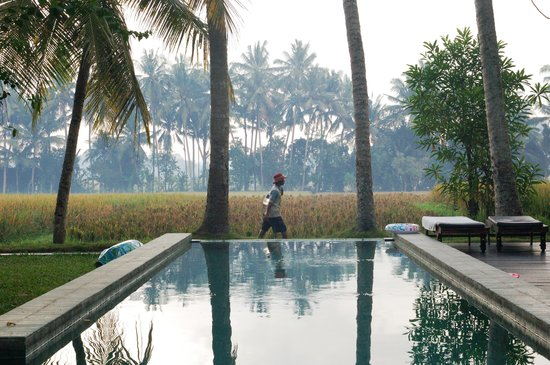 Bali T House: the pool