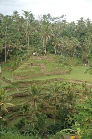 Bali T House: 'suburbs' of ubud