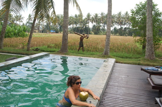 บาหลีทีเฮ้าส์: the coconut came from the palm tree behind