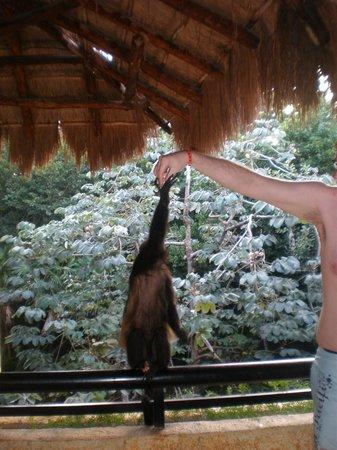 Iberostar Quetzal Playacar: feeding monkeys